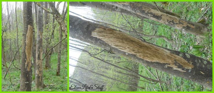 alberiecervi